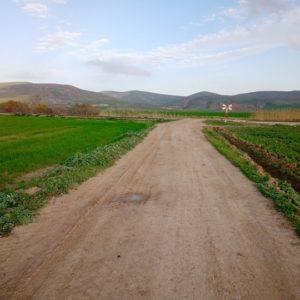 Terrain agricole à Mateur T105