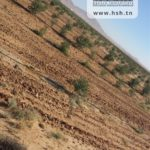 Photo-2 : Terrain Agricole à Mezzouna