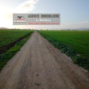 Terrain agricole à mateur