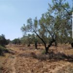 Sania Ecovillage
