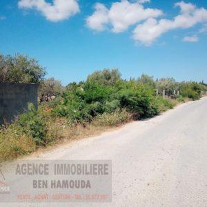 Terrain agricole irrigué à hariza Bizerte