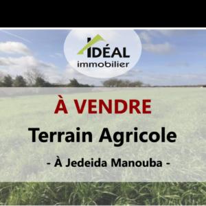 Terrain agricole à Jedeida