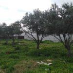 Photo-2 : Terrain EL Yakouta
