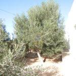 Photo-14 : Maison à petit prix à Djerba Midoun