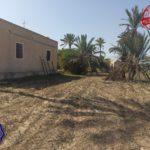 Photo-10 : Ancienne demeure avec fermes et puit d'eau titre bleu à Midoun Djerba