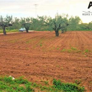 Beau terrain agricole qui fait le coin à Daroufa, Al-Maamoura, Nabeul