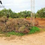 Photo-2 : Beau terrain agricole qui fait le coin à Daroufa, Al-Maamoura, Nabeul