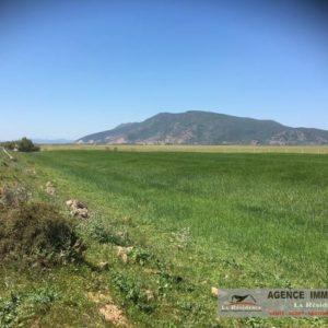 Terrain agricole à Ain Ghlel Utique Bizerte