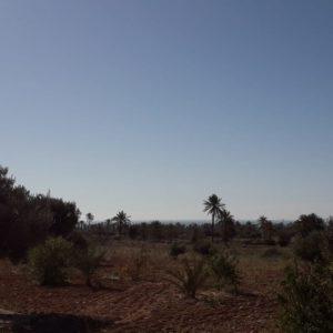 Grand terrain vue mer à Chebabia Midoun Djerba