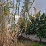 Photo-6 : Villa S+2 non meublée à Tezdaine Djerba