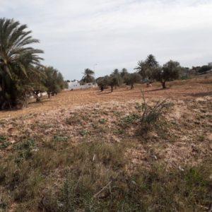 Terrain 2500 m² avec vue panoramique à Aghir Djerba