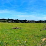 Photo-4 : Terrain agricole de 7789m² à Somâa, Nabeul
