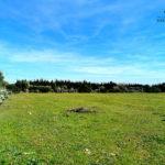 Photo-5 : Terrain agricole de 7789m² à Somâa, Nabeul