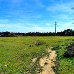 Photo-6 : Terrain agricole de 7789m² à Somâa, Nabeul