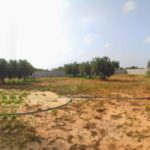 Photo-5 : Ferme clôturée équipé d'une puits d'eau et oliviers