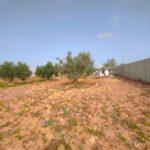 Photo-4 : Ferme clôturée équipé d'une puits d'eau et oliviers