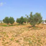 Photo-9 : Ferme clôturée équipé d'une puits d'eau et oliviers