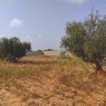Photo-8 : Ferme clôturée équipé d'une puits d'eau et oliviers