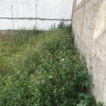 Photo-1 : Terrain de 500m² à Ain Zaghouan