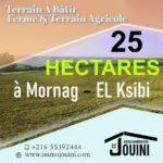 Photo-1 : Terrain Agricole 25 Hectares à Mornag Ksibi