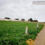Photo-2 : ارض للبيع فى طريق بنى مسلم