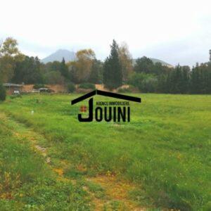 Terrain 6674 m² à Mornag Route Boumhal