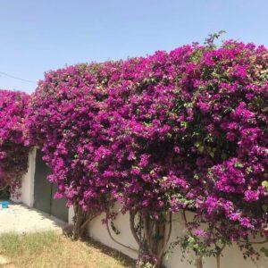 Villa S5 avec Jardin à La Marsa