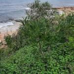 Photo-1 : Terrain de 4000 m² vue mer à Gammarth zone touristique
