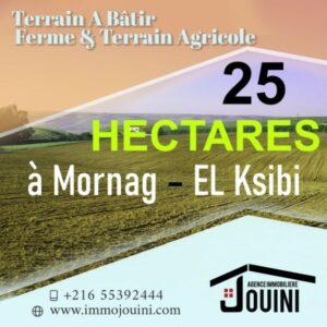Terrain Agricole 25 Hectares à Mornag Ksibi