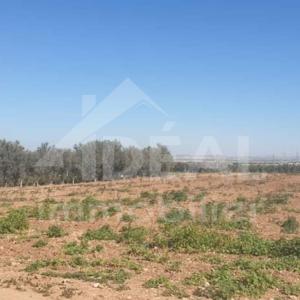 Ferme de 8 hectares à Borj El Amri