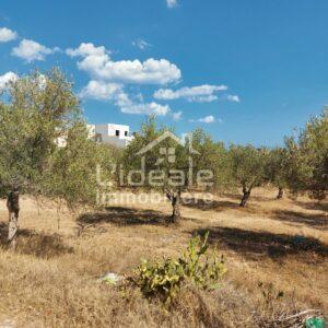 Terrain Katia à Hammamet Nord