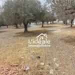 Terrain Souha à Hammamet