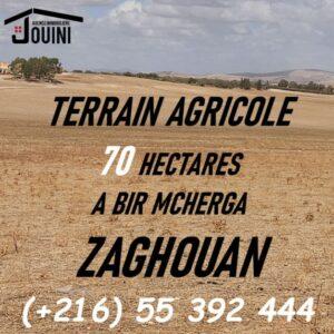 Terrain 70 Hectares à Bir Mchergua Zaghouan
